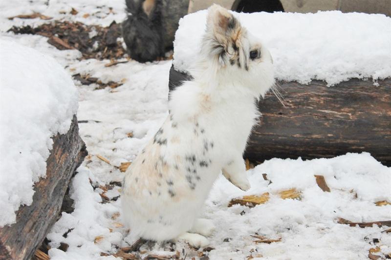 Mascherl (2010)Kaninchen/Kleintiere