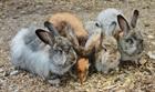 Winnie, Flöckle, Flynt und Rosemarie (2014)Kaninchen/Kleintiere