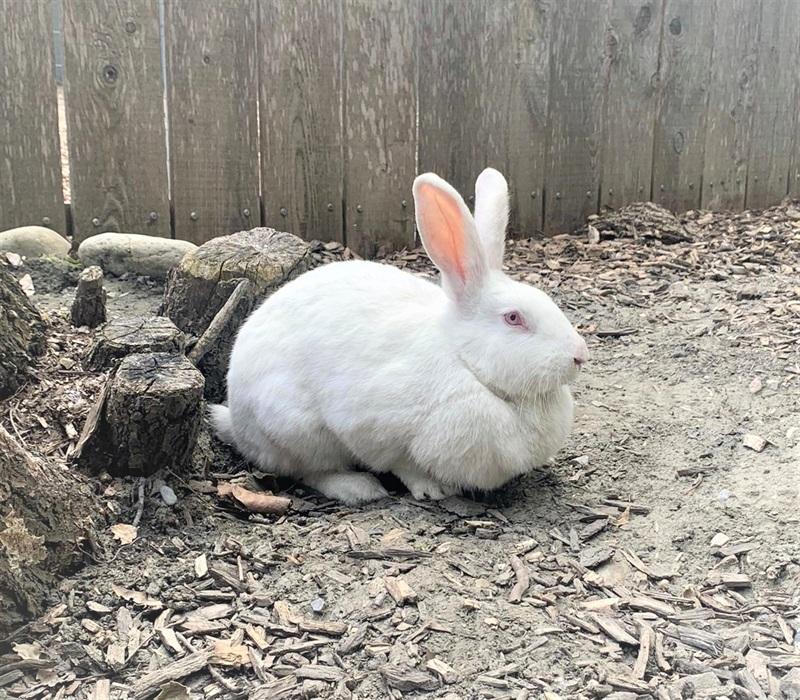 Linda(2019)Kaninchen/Kleintiere