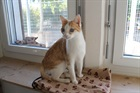 Garfield()EHK/Katzen
