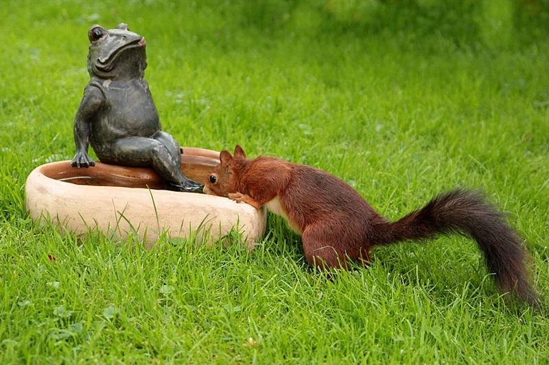 Auch Tiere haben bei dieser brütender Hitze grossen Durst