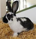 Schäggle(0)Kaninchen/Kleintiere