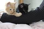 Linus und Lucy (2014)EHK/Katzen