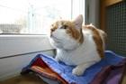 Timmi(2002)EHK (Europäische Hauskatze)/Katzen