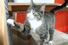Lucy(2012)EHK/Katzen