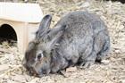 Louisa(2010)Kaninchen/Kleintiere