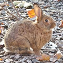 Egon(2012)Kaninchen/Kleintiere
