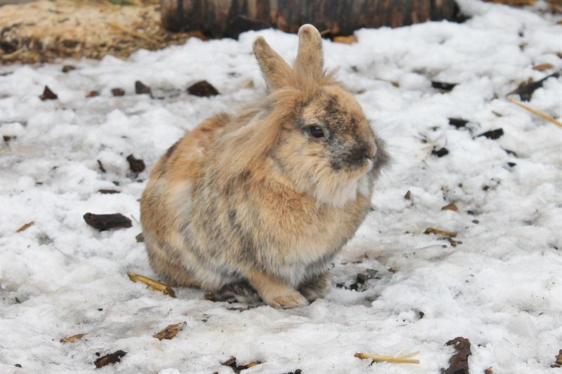 Krümel(2015)Kaninchen/Kleintiere