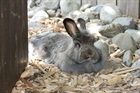 Eowin(2014)Kaninchen/Kleintiere