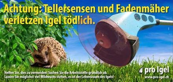 Achtung Igel!