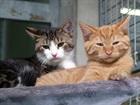 Jules und  Garfield (2019)EHK/Katzen