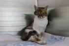 Fiona(0)EHK/Katzen