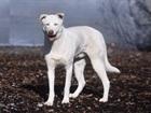 Woolk (2009)Huskymischling/Hunde