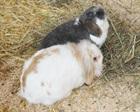 Rumba und Leo(2008)/Kleintiere