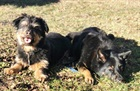 Benno(2012) und Laika (2007)(0)/Hunde