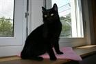 London  (2007)EHK (Europäische Hauskatze)/Katzen