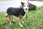 Jessy(1999)Blessmix/Hunde
