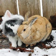 Wolly und Stupsi(2015)Kaninchen/Kleintiere