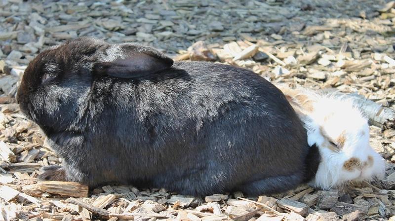 Peter(2010)Kaninchen/Kleintiere