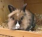 Lilly(2015)Kaninchen/Kleintiere