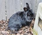 Anton (2010)Kaninchen/Kleintiere