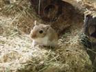 Fredy und Paul()Gerbil/Kleintiere