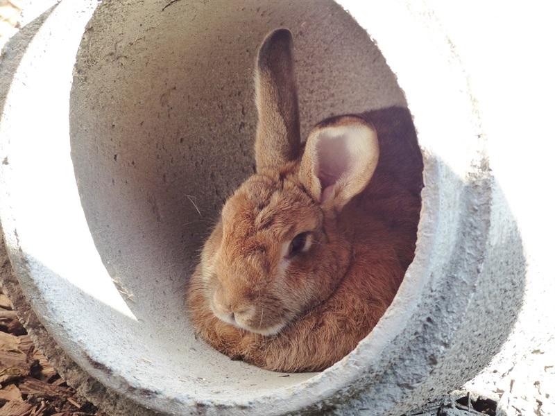 Egon (2012)Kaninchen/Kleintiere