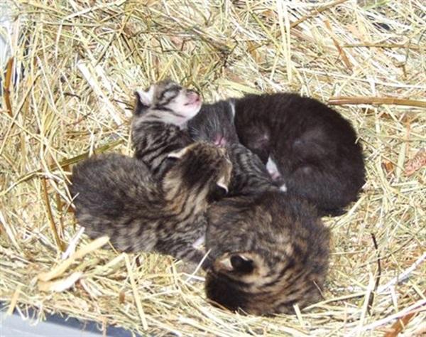 Wichtig: Katzen - Kastrationen