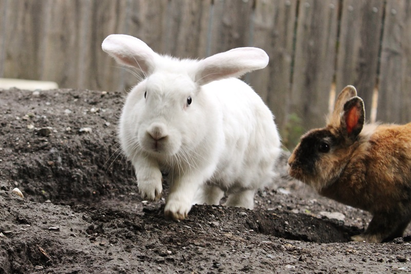 Sunny (2014)Kaninchen/Kleintiere