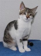 Schnurrli()EHK /Katzen