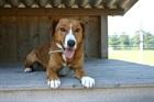 Lisa (2010)Blessmischling/Hunde