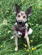 Leyla(2018)Mischling/Hunde