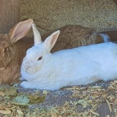 Egon (2012) und Schneewittchen (2018)(0)Kaninchen/Kleintiere