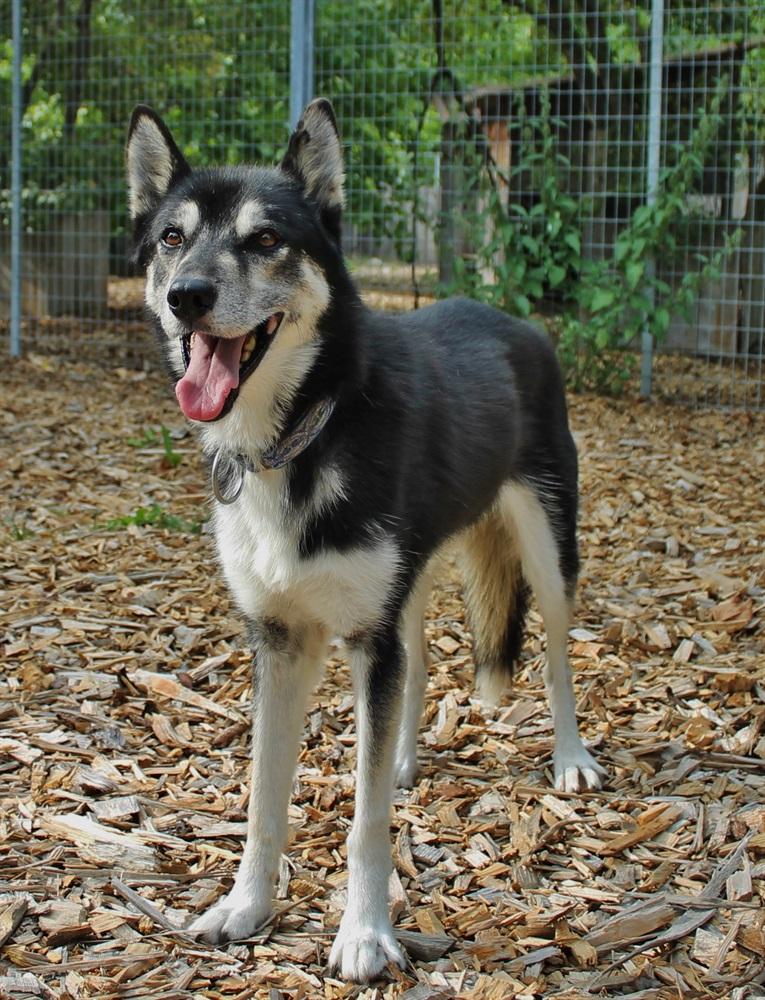 Thaleia (2004)Siberian Husky/Hunde