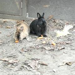Tata und Jonny(2016)Löwenkopf Kaninchen/Kleintiere