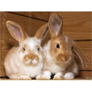 Kaninchen sind keine Ostergeschenke