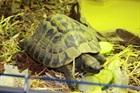 Lou()Landschildkröte/Kleintiere