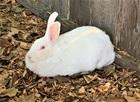 Lieschen(2019)Kaninchen/Kleintiere