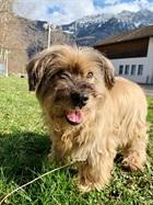 Einstein(2006)Tibet - Terrrier/Hunde