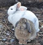 Zeppo und Xabea(2017)Kaninchen/Kleintiere