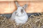 Lulu(2010)Kaninchen/Kleintiere