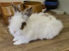 Fleur(0)Kaninchen/Kleintiere