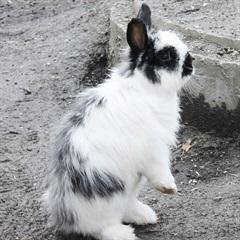 Chris(2011)Kaninchen/Kleintiere