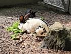 Crash und Belinda(0)Kaninchen/Kleintiere