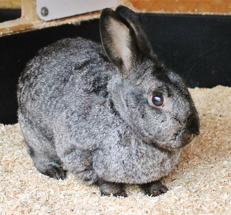 Alvin(2010)Kaninchen/Kleintiere