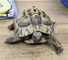 Landschildkröte aus Schaan(0)Landschildkröte/Kleintiere