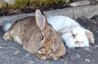 Egon und Leo(2012)Kaninchen/Hunde