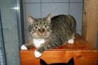 Schnurri(2007)EHK/Katzen