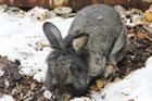 Louis(2010)Kaninchen/Kleintiere