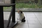 Trine(2006)EHK/Katzen